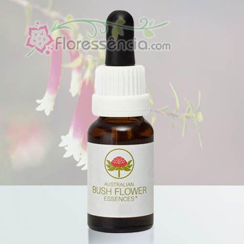 Bush Fuchsia - 15 ml  - Floressência