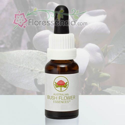 Bush Gardenia - 15 ml - Floressência