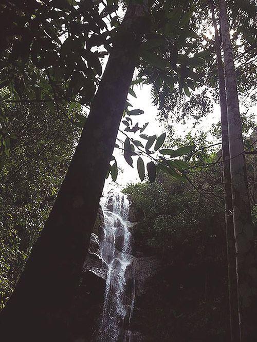 Cachoeira da Entrega - 10 ml  - Floressência