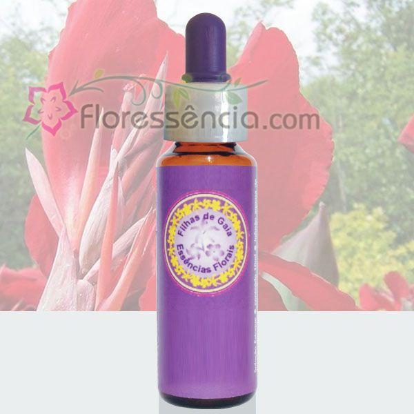 Caetê Vermelho - 10 ml  - Floressência