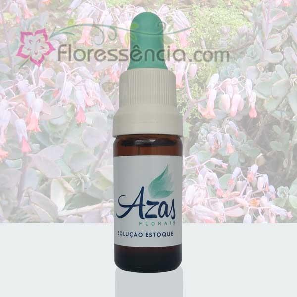 Calanchoe Fantasma - 10 ml  - Floressência