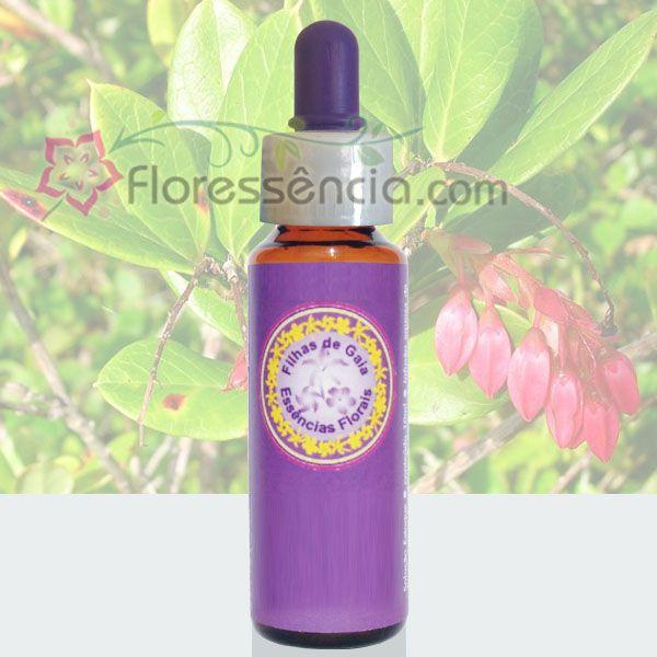 Camarinha - 10 ml  - Floressência