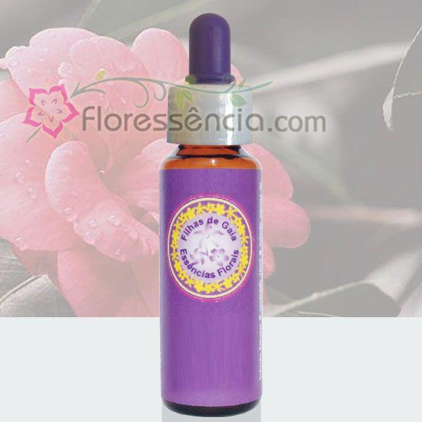 Camélia Rosa - 10 ml  - Floressência