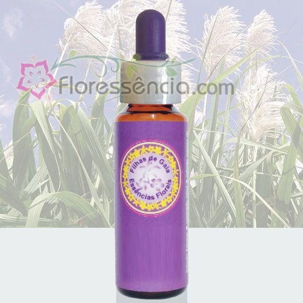 Cana de Açúcar - 10 ml  - Floressência
