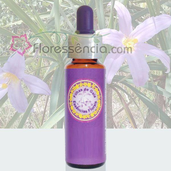Canela de Ema - 10 ml  - Floressência