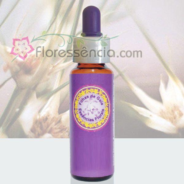 Capim Estrela - 10 ml  - Floressência