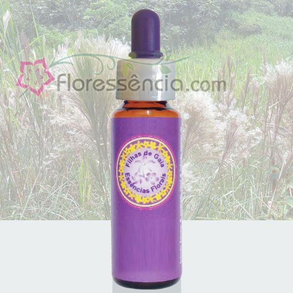 Capim Rabo de Raposa - 10 ml  - Floressência