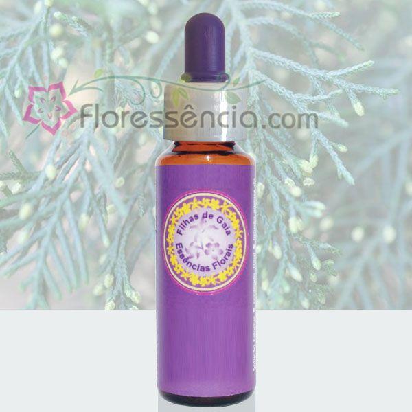 Cedrinho - 10 ml  - Floressência