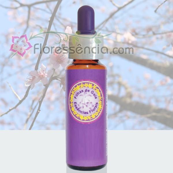Cerejeira/Cerejeira Rosa- 10 ml  - Floressência