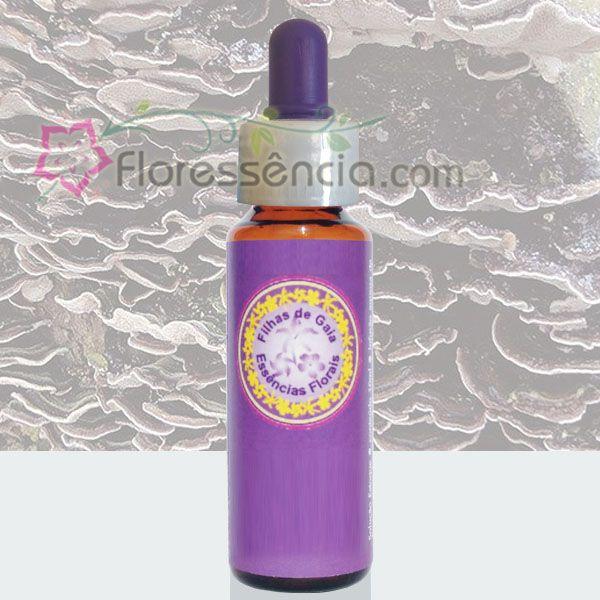 Cogumelo Redenção - 10 ml  - Floressência