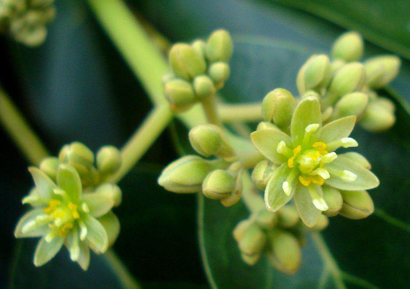 Colo de Mãe - 10 ml  - Floressência