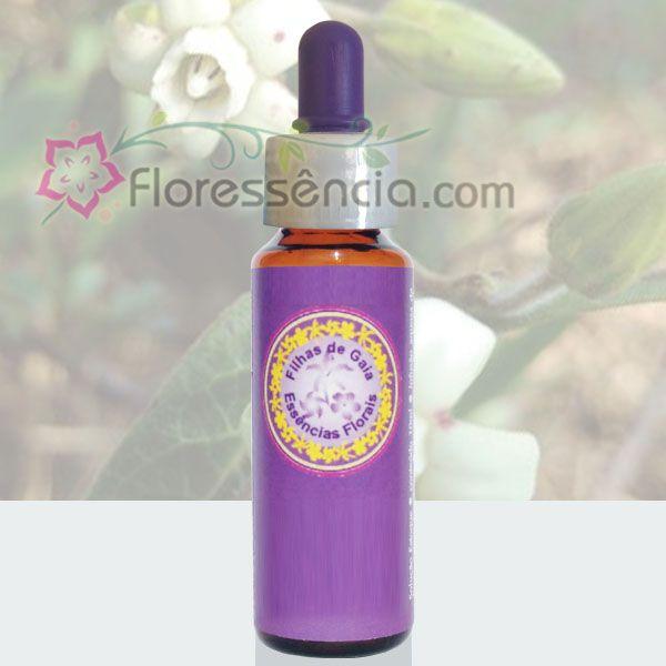 Cometa - 10 ml  - Floressência