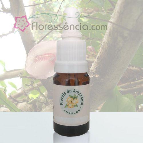 Concha Lilás - 10 ml  - Floressência