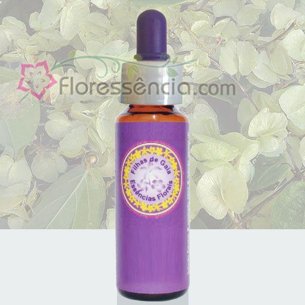 Coração Verde do Cerrado - 10 ml  - Floressência