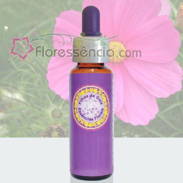 Cosmos Magenta - 10 ml  - Floressência