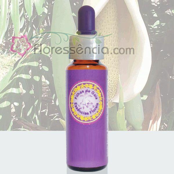 Costela de Adão - 10 ml  - Floressência