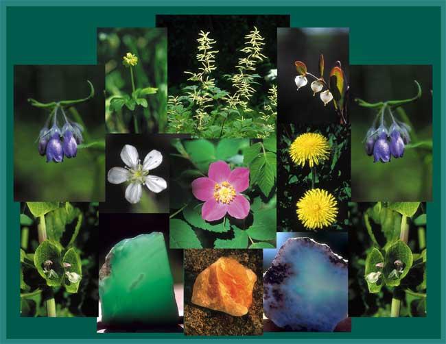 De Bem com a Vida - 30 ml - Gotas  - Floressência
