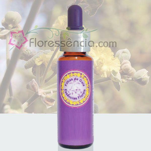 Douradinha do Campo - 10 ml  - Floressência