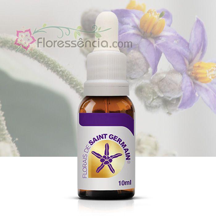 Erianthum - 10 ml  - Floressência