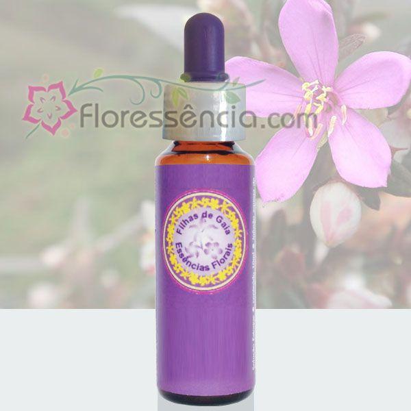Érica - 10 ml  - Floressência