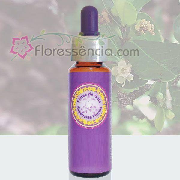 Estrela da Vida - 10 ml  - Floressência