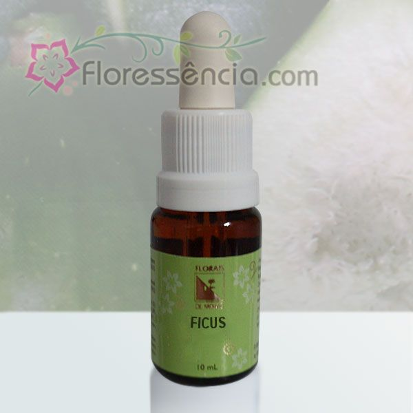 Ficus - 10 ml  - Floressência