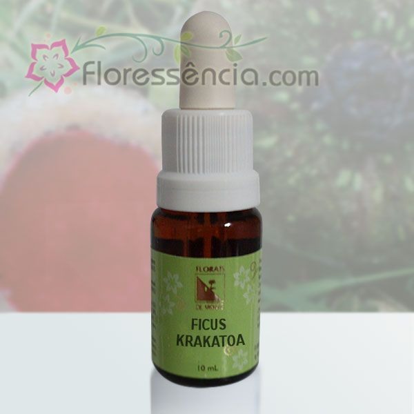 Ficus Krakatoa - 10 ml  - Floressência