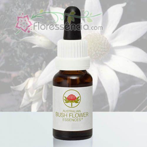 Flannel Flower - 15 ml  - Floressência
