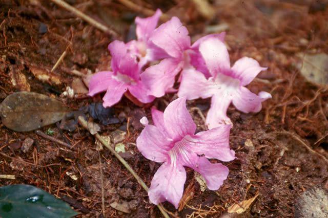Flor Boa - 10 ml  - Floressência