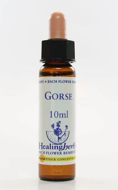 Gorse - 10 ml  - Floressência