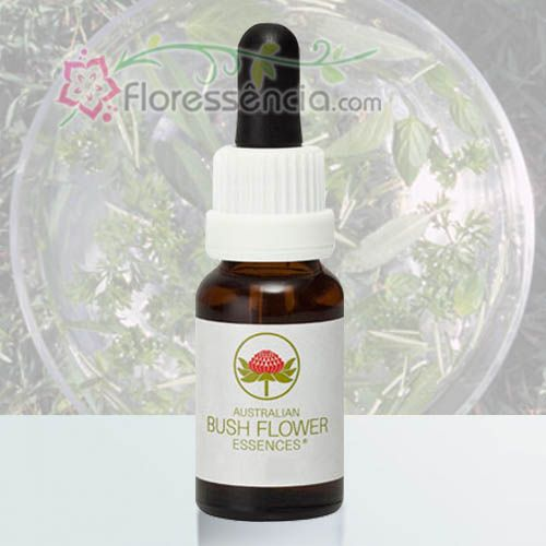 Green Spider Orchid - 15 ml  - Floressência