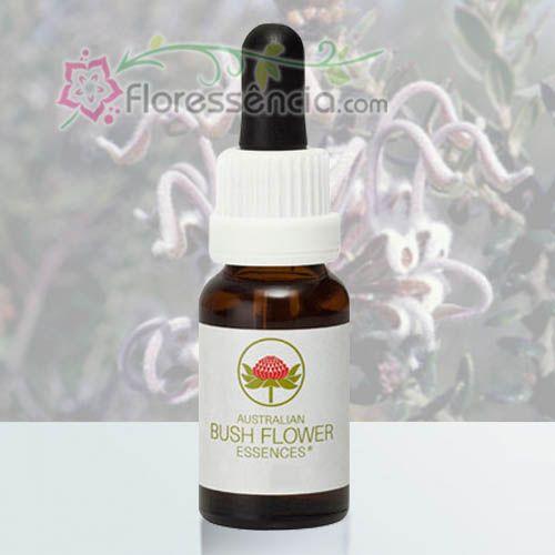Grey Spider Flower - 15 ml  - Floressência