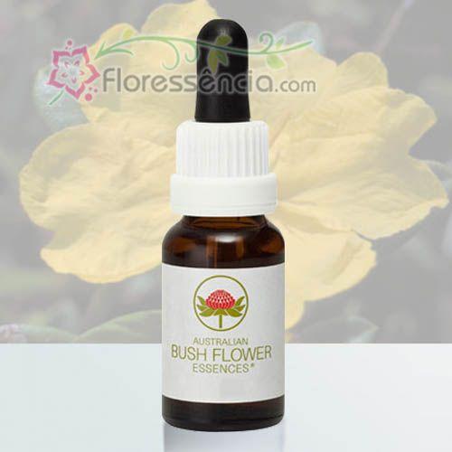 Hibbertia - 15 ml  - Floressência