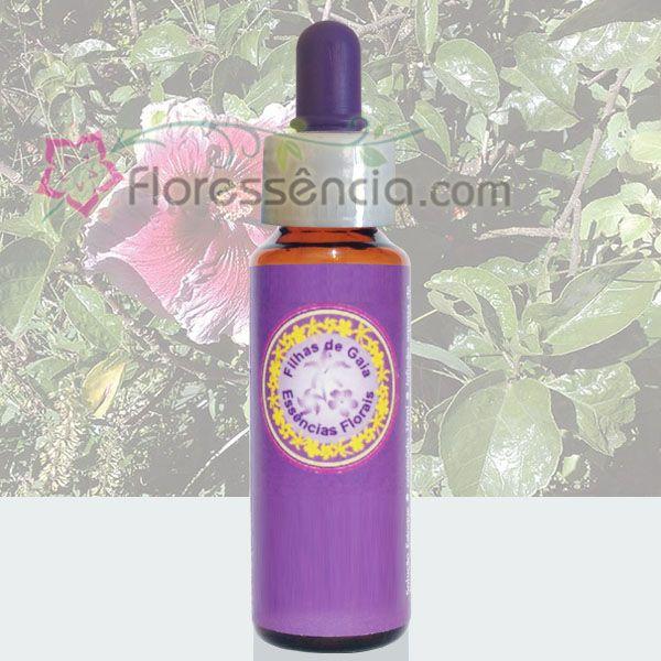 Hibisco Lilás e Vermelho - 10 ml  - Floressência