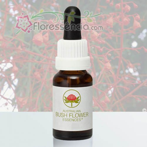 Illawarra Flame Tree - 15 ml  - Floressência