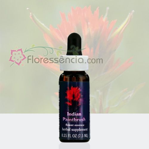 Indian Paintbrush - Floressência