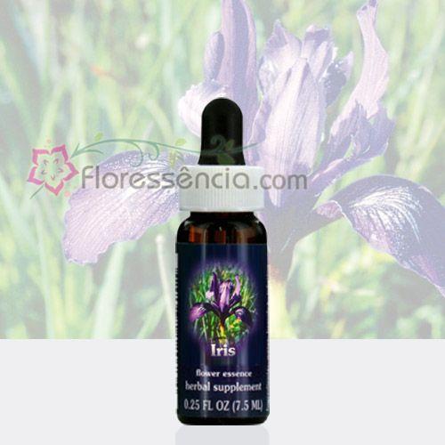 Iris  - Floressência