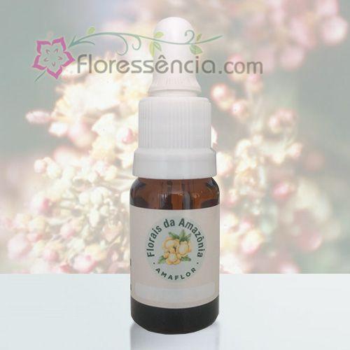 Jagube - 10 ml  - Floressência