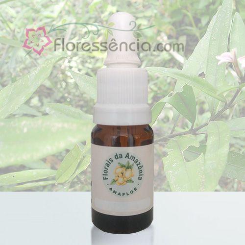 Japana Roxa - 10 ml  - Floressência