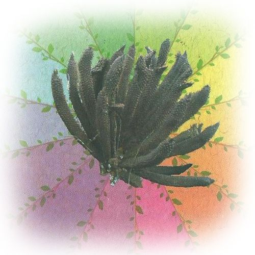 Jarina - 10 ml  - Floressência