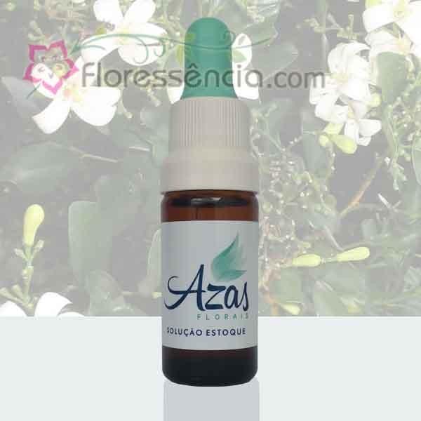 Jasmim - 10 ml  - Floressência