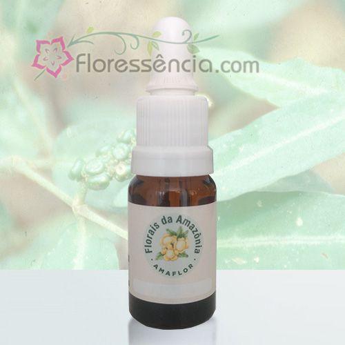 João Brandim - 10 ml  - Floressência