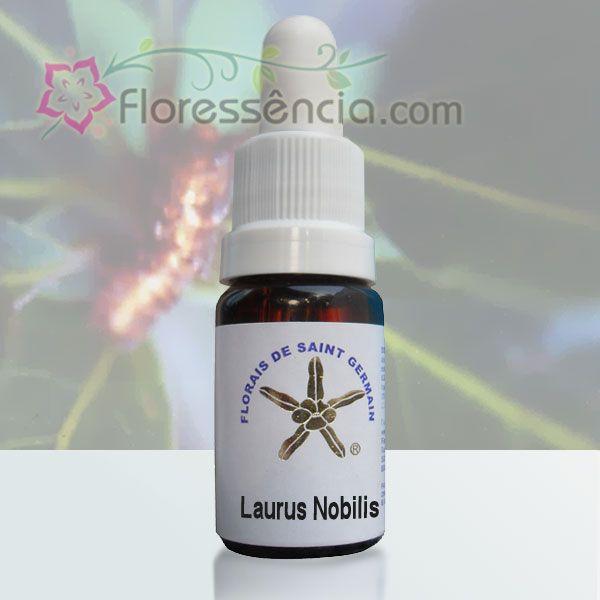 Laurus Nobilis - 10 ml  - Floressência