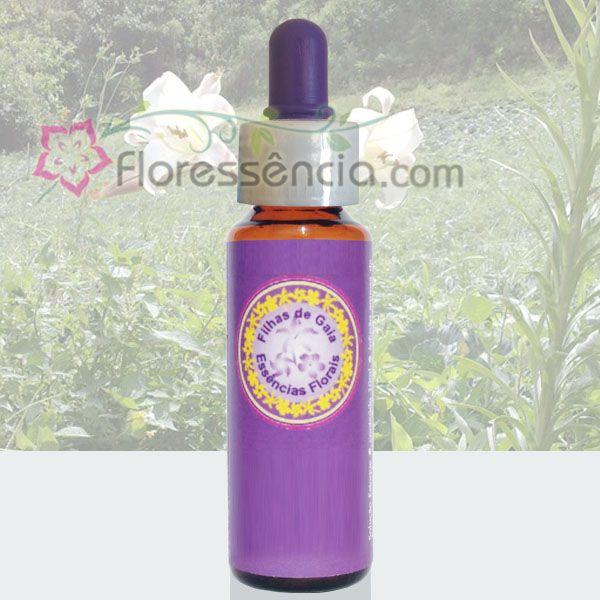 Lírio da Montanha - 10 ml  - Floressência