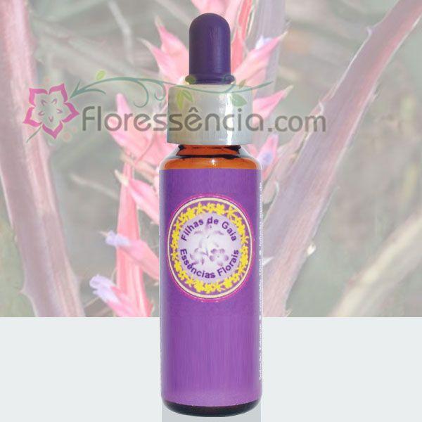 Macambira - 10 ml  - Floressência