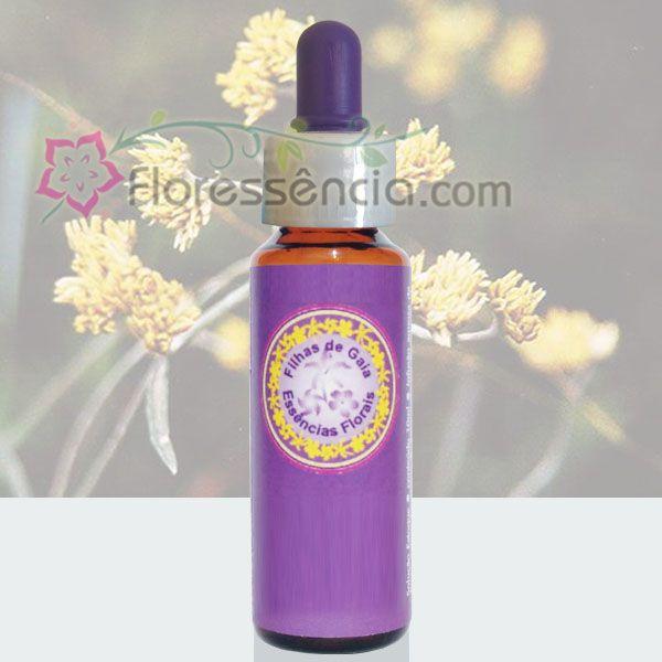 Macelinha - 10 ml  - Floressência