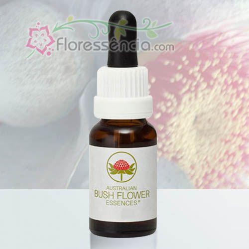 Macrocarpa - 15 ml  - Floressência
