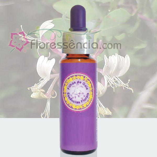 Madressilva - Filhas de Gaia - 10 ml  - Floressência