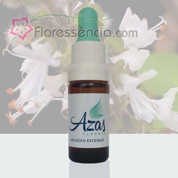 Manjericão - 10 ml  - Floressência