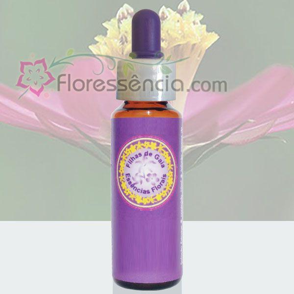 Margarida de Alagoas - 10 ml  - Floressência